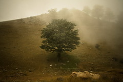 God's Painting (hapal) Tags: cloud mountain tree green fog canon landscape eos iran jungle creativecommons iranian       40d shahrud hapal  hamidnajafi upcoming:event=916887