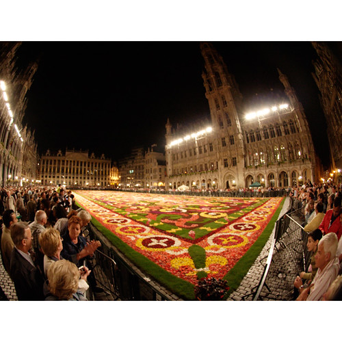Flower carpet, Grand Place, Brussels
