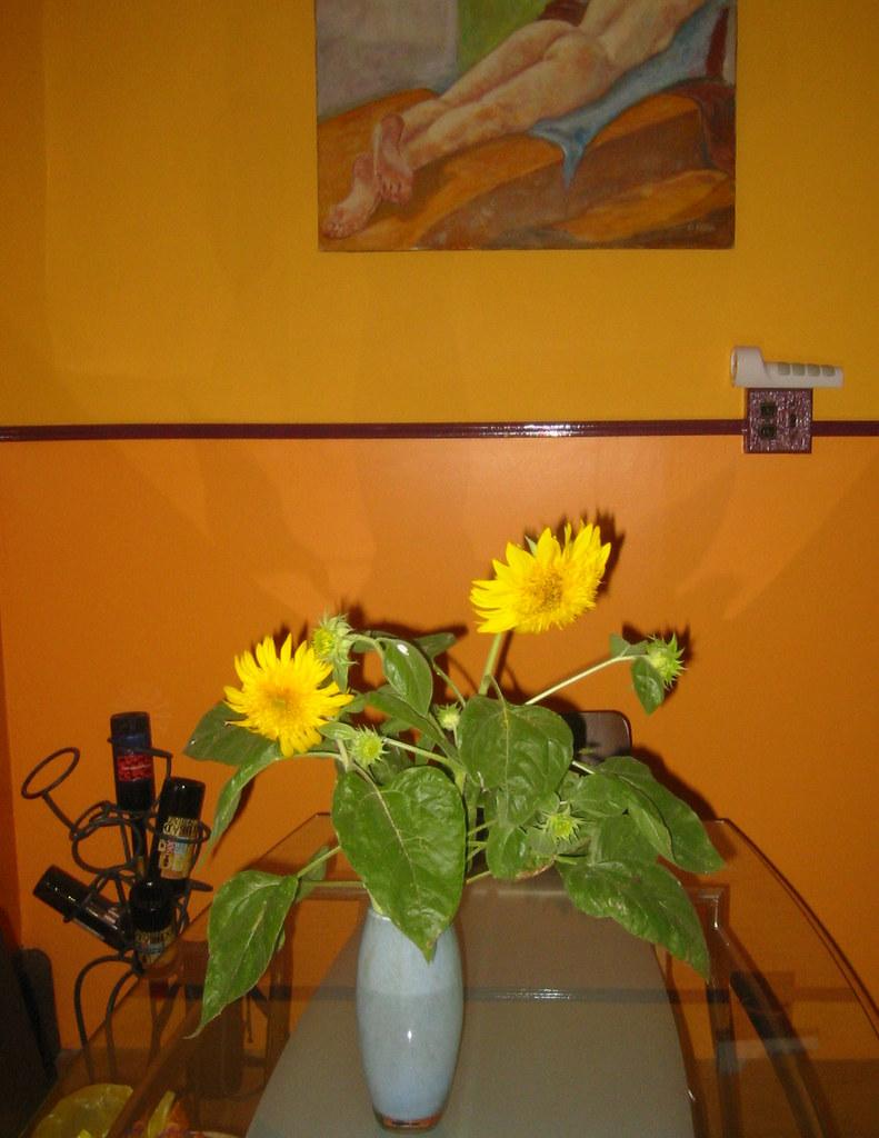 punished sunflowers