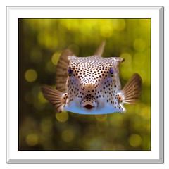 Boxfish Bokeh !!!