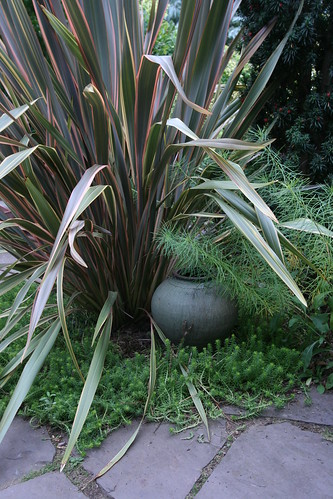Phormium in front garden at Bloomtown garden in Portland