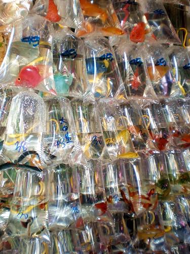 Comercializacion de Peces Ornamentales en el Mundo