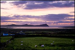 Sunset on the Dingle Peninsula (Jeanette Lowe (fishflix)) Tags: ireland sunset sheep dingle kerry views blaskets dinglepeninsula blasketislands andaingean fishflix