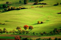 Rural Area (Matthias Hilf) Tags: autumn trees green nature rural germany landscape photography minolta herbst natur feld meadow wiese dynax7d baden landschaft wavy bume hilly undulating wrttemberg lndlich wuerttemberg hegau