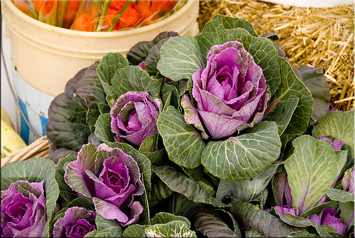 FarmersMaket2008 Ornamental Cabbage