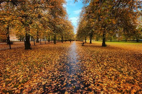 Autumn continues......