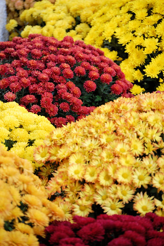 Mums by Mayo Clinic Rochester MN