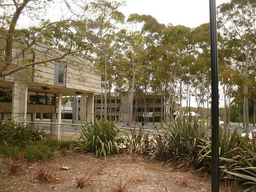 blog voyage australie sydney whv backpacker travel campus université macquarie