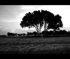 (morgan.laforge) Tags: tree field kansas