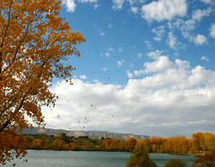and Autumn sweeps in. (Outrageous Images) Tags: autumn fall water leaves google colorado wind bing grandjunction twitter connectedlakes outrageousimages davewadsworth