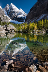 Pristine Canadian Alpine (Marc Shandro) Tags: blue autumn sky mountain lake snow canada mountains reflection fall nature water vertical landscape rockies pond clean clear alpine northamerica rockymountains larch yoho lakeohara mywinners getty2