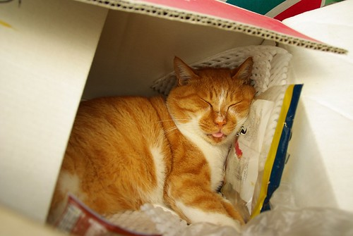 In a cardboard box #2