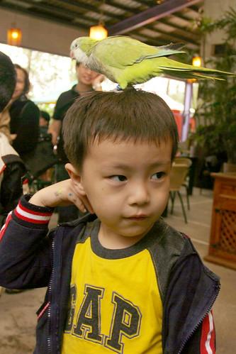 你拍攝的 三富花園農場:Ryan很愛小鳥站他頭上。