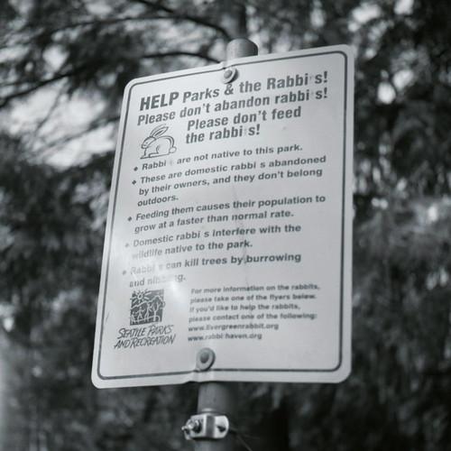 Rabbis #4