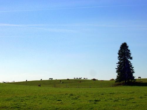 Horizon of horses