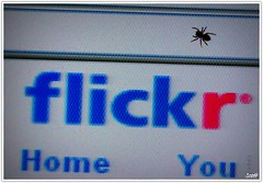 Flickr's Got Bugs! (mr1derful745) Tags: blue red digital canon bug computer eos rebel spider flickr screen bugs monitor 2008 xti
