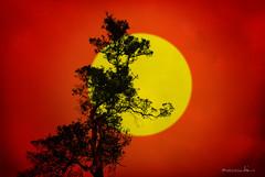 Shine With Me (maraculio) Tags: red orange tree me yellow pine pod shine with baguio thursday 26th aplusphoto imago2007 imagoism maraculio
