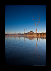 In the lake, my shattered reflection. (Matthew Stewart | Photographer) Tags: trees reflection tree water fog sunrise dead still matthew stewart qld queensland cunninghamhighway lakemoogerah