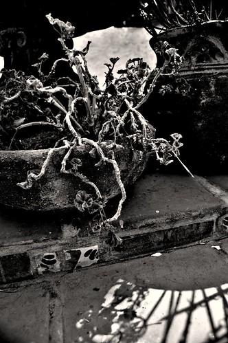 accidental bonsai