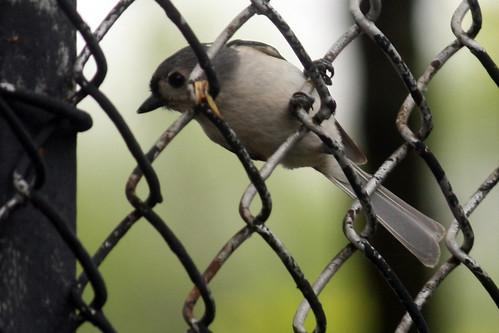 bird 053