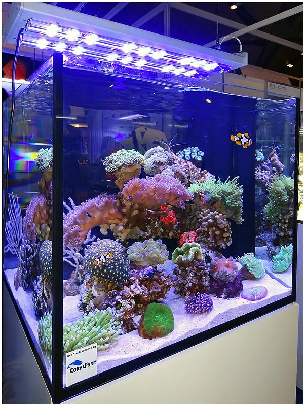 Aquarama_2011-019