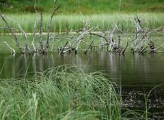 Lac de tourbire (raym5) Tags: lac cantal tourbire collanges raym5