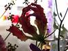 2014 Flower Show 053 (Adam Cooperstein) Tags: philadelphia pennsylvania flowershow philadelphiaflowershow philadelphiapennsylvania commonwealthpa 2014philadelphiaflowershow