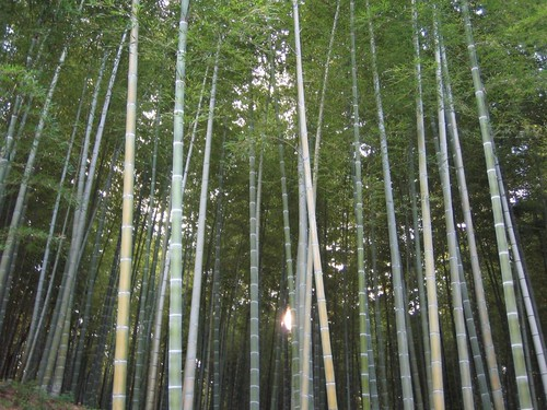天龍寺近辺の「竹林」-01