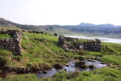 Eigg 2004-180.JPG (SueWalkerWhite) Tags: scotland highlands eigg smallisles