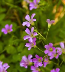Spring Symphony (edwardleger) Tags: flowers color green nature louisiana purple vivid 2008 theperfectphotographer edwardleger exquisiteimage explorewinnersoftheworld edwardnleger