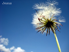 Diente de Len (Jess Gutirrez Gmez) Tags: sky naturaleza flores nature de colombia jesus leon cielo gutierrez medellin diente diamondclassphotographer flickrdiamond macroflowerlovers dindelion