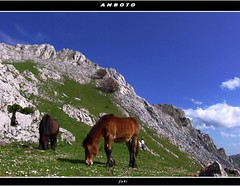 a 1200 m de altitud (Jabi Artaraz) Tags: horse naturaleza nature beautiful animal fauna landscape amazing spain europa europe gorgeous sony natur natura paisaje bilbao zb lovely bizkaia vizcaya bilbo basquecountry spanien baskenland 1000views biskaia smrgsbord animaliak pasvasco udaberria galope naturesfinest beautifulearth anboto supershot 100faves 1000vistas biskaya euskoflickr 35faves fineartphotos fantasticnature mywinners abigfave basquelandscape colorphotoaward impressedbeauty superaplus aplusphoto flickrbest impressedbeauy superbmasterpiece favemegroup3 diamondclassphotographer flickrdiamond excellentphotographerawards excapture paisajevasco jartaraz flickrestrellas landscapesofvillagesandfields multimegashot paisajesdepueblosycampos llovemypics alfa350 flickrlovers 100commentgroup vosplusbellesphotos lesamisdupetitprince bderechosdeautorauthorscopyrightbjabiartaraz bestofblinkwinners blinksuperstars