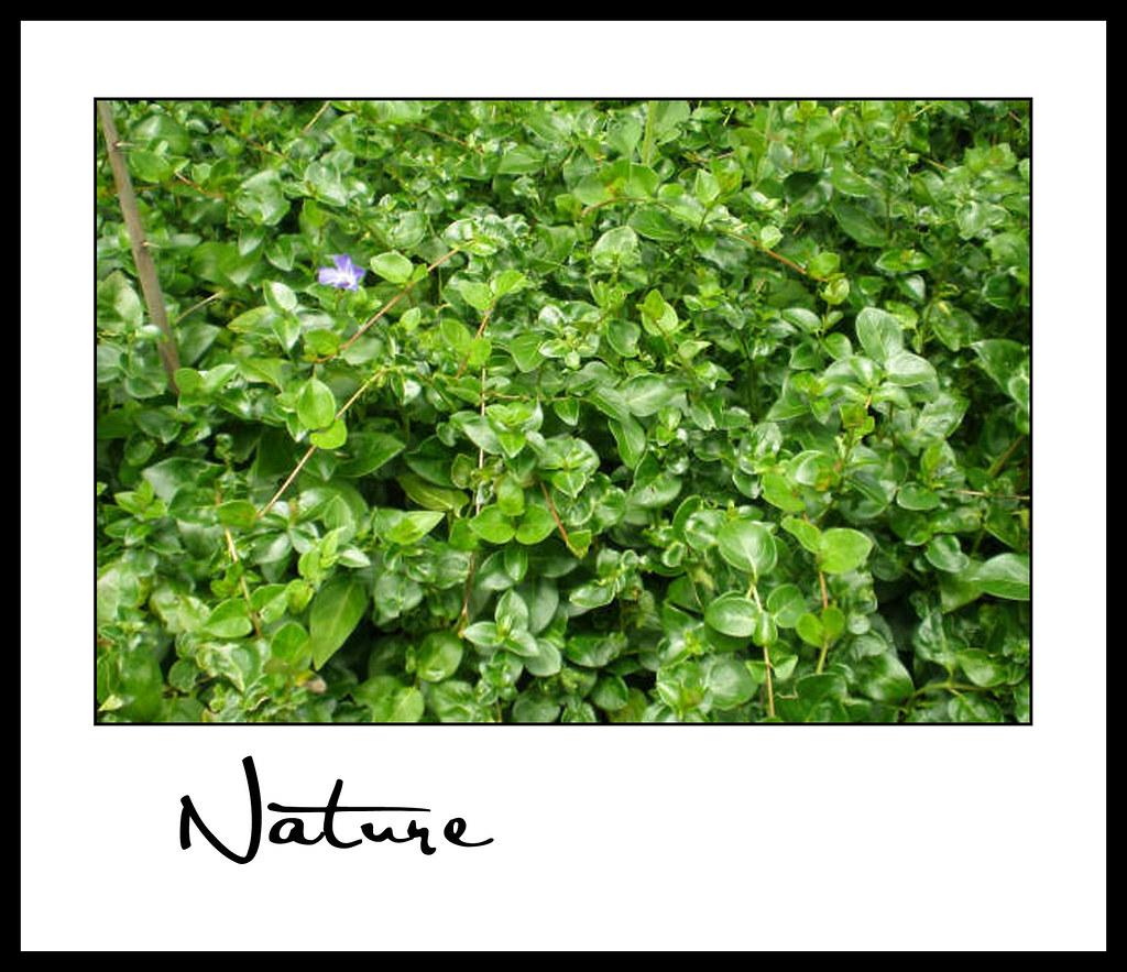 Nature_Andrea B 02