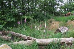 Priory Farm Discovery Walk #11