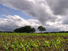 (Sea_Albert) Tags: sky holland nature netherlands dutch clouds landscape photography groen fotografie nederland natuur wolken groningen lucht landschap allrightsreserved alberteveraarts seaalbert everaarts alberteveraartsphotography