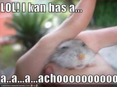 I can has Achoo