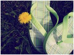 vans. (frankiehugme) Tags: grass wall garden hp off flip vans flop photosmart m425