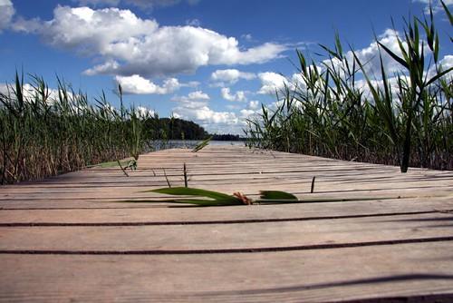 Holzplanken führen durchs Schilf Richtung See
