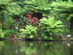 Açores - S. Miguel (Miguel Tavares Cardoso) Tags: flores verde portugal água plantas natureza reflexo azores açores miguelcardoso ilustrarportugal sérieouro miguelcardoso2008 migueltavarescardoso