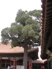 China-0169
