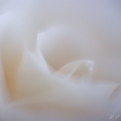 white dream (oreolla) Tags: ohio usa white abstract macro rose canon rebel dream dslr kiss2 macrolens 10x shadesofwhite whitedream artlibre spiritofphotography oreolla olgamtsetlin