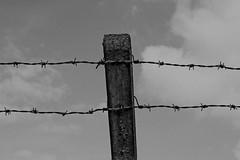 barbed wire (Leo Reynolds) Tags: bw photoshop canon eos iso100 wire barbedwire barbed f11 30d 0ev 0006sec 41mm hpexif leol30random xratio32x groupblackwhite groupsepiabw xleol30x
