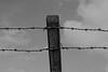 barbed wire (Leo Reynolds) Tags: barbedwire barbed wire photoshop bw leol30random canon eos 30d 0006sec f11 iso100 41mm 0ev groupblackwhite groupsepiabw xleol30x hpexif xratio3x2x xx2008xx