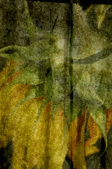 digitalartflower12 (Edwin Loyola) Tags: photography fineart digitalart edwinloyola