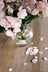the last rose of summer... (FotoCath) Tags: flowers roses summer fleur garden nikon rosa roos vase 2008 fotocath