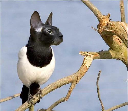 حيوانات وطيور لم تشاهدها من قبل  ( فوتوشوب ) 2823449032_8d5eb0fc39.jpg?v=0