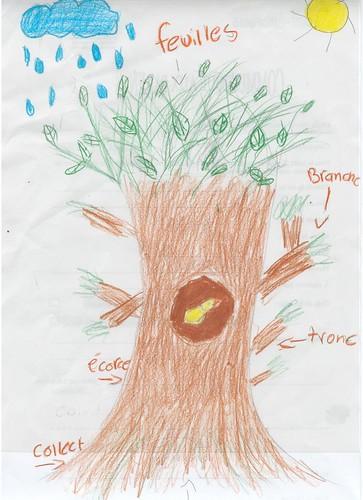 plan d'un arbre