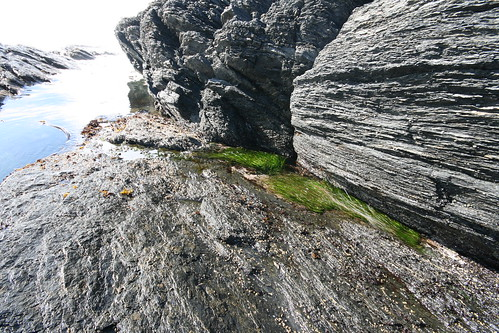 Ultra-green seaweed in the tidepools