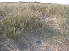 Freeform motif in sand dunes (freeform by prudence) Tags: spiral crochet medallion freeform