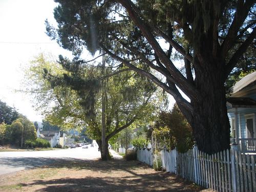 Tomales, California
